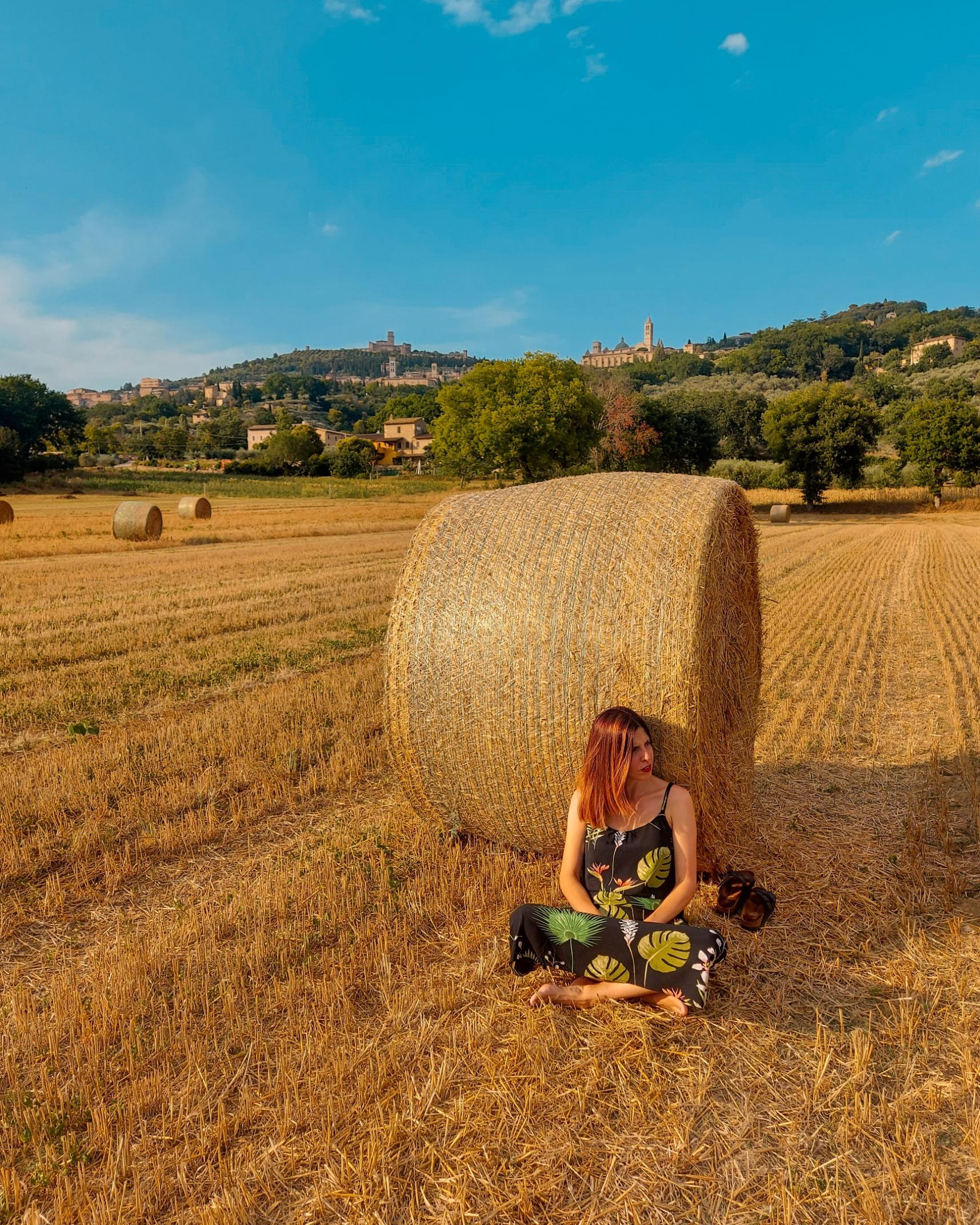 campo di grano e sullo sfondo Assisi