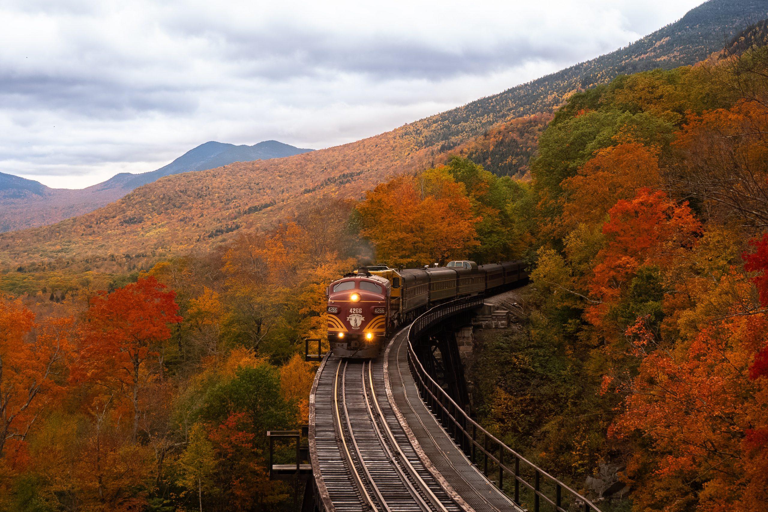 treno immerso nel bosco